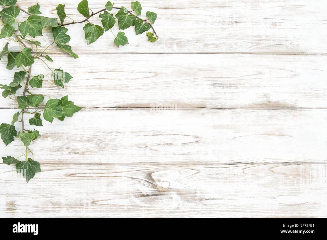Plantes vertes sur fond en bois clair. Modèle floral Banque D'Images