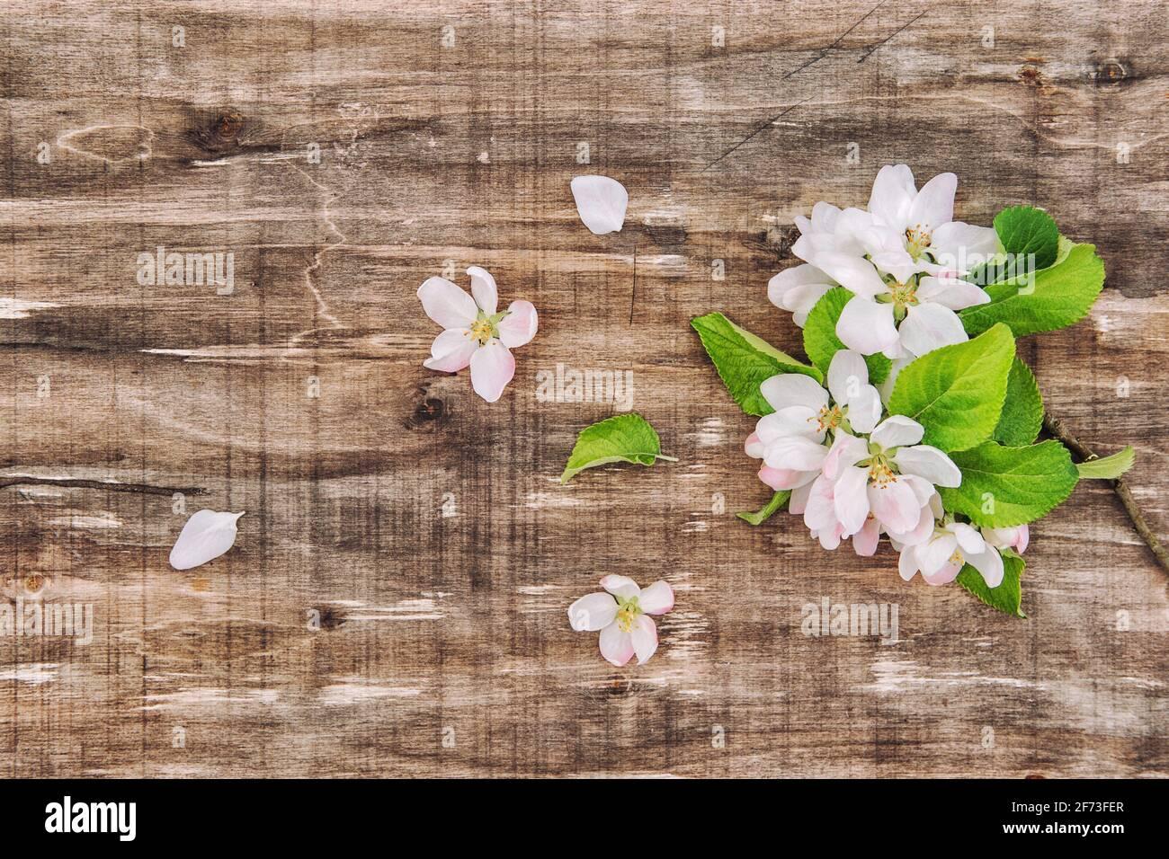 Fleurs printanières sur fond de bois. Fleurs d'arbre de pomme. Plat à motif fleuri Banque D'Images