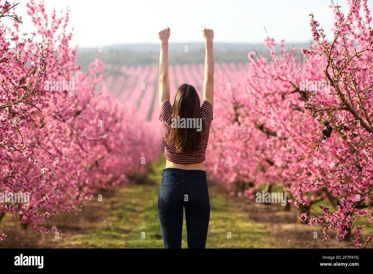 Vue arrière d'une femme célébrant des vacances en levant les armes un terrain à fleurs roses au printemps Banque D'Images