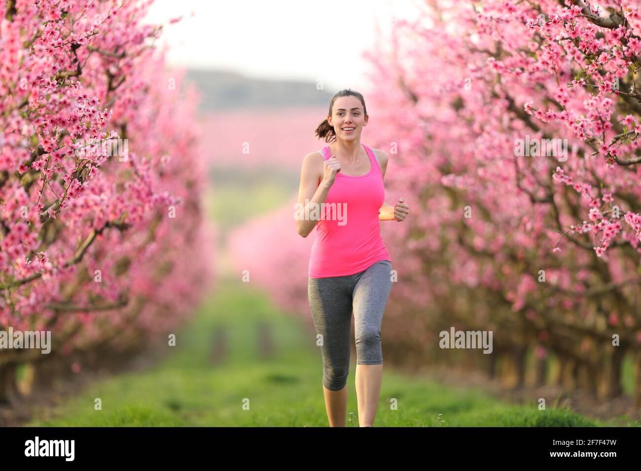 Vue de face d'un jogging heureux en direction de l'appareil photo un champ de fleurs roses Banque D'Images