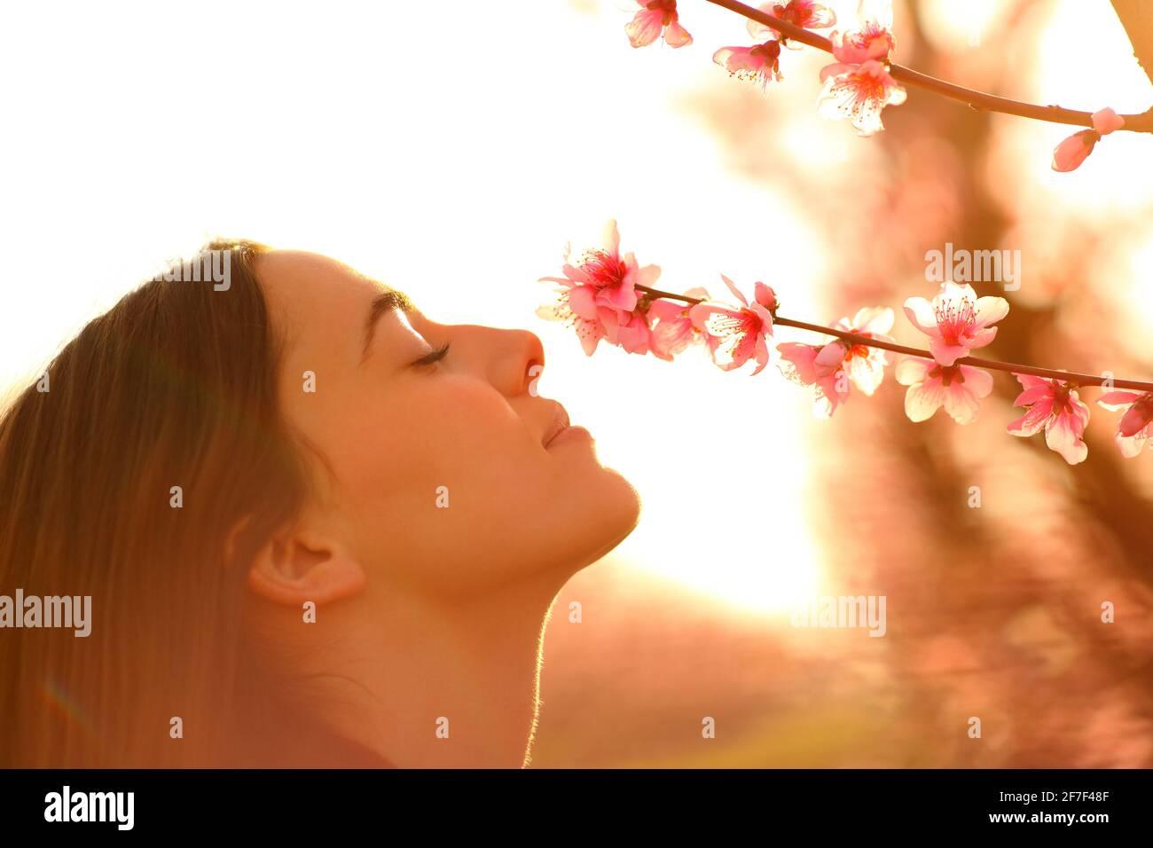 Profil d'une femme heureuse qui sent des fleurs de l'arbre pendant fleurir au printemps au coucher du soleil dans un champ Banque D'Images
