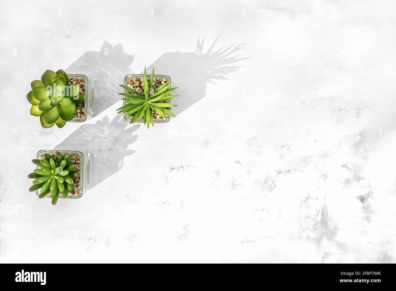 Plat floral avec de succulentes plantes sur fond de pierre de marbre Banque D'Images