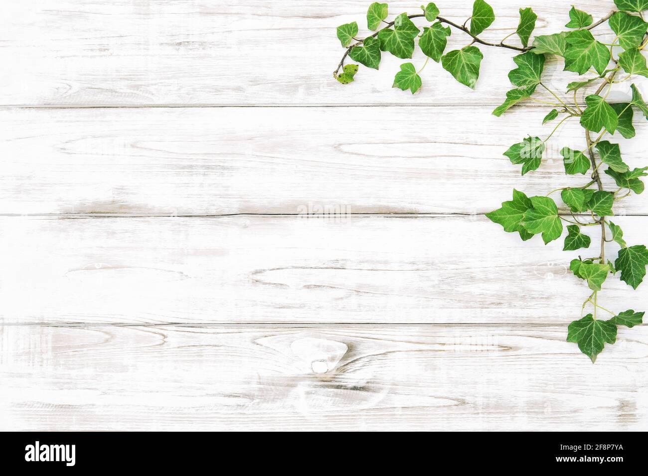 Plantes vertes sur une texture en bois clair. Fond floral Banque D'Images