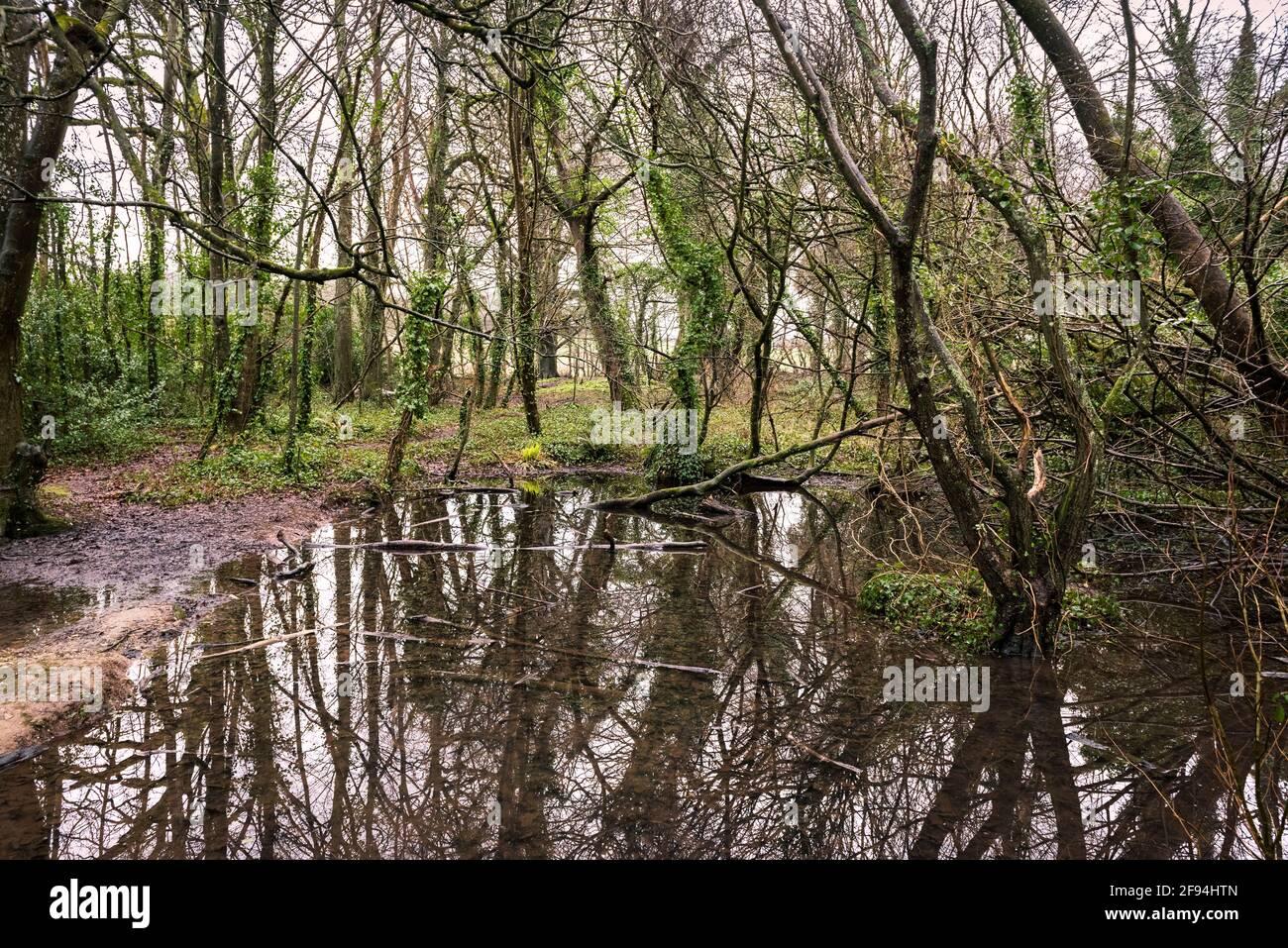 Un étang à Tehidy Woods dans Cornwall Royaume-Uni Banque D'Images