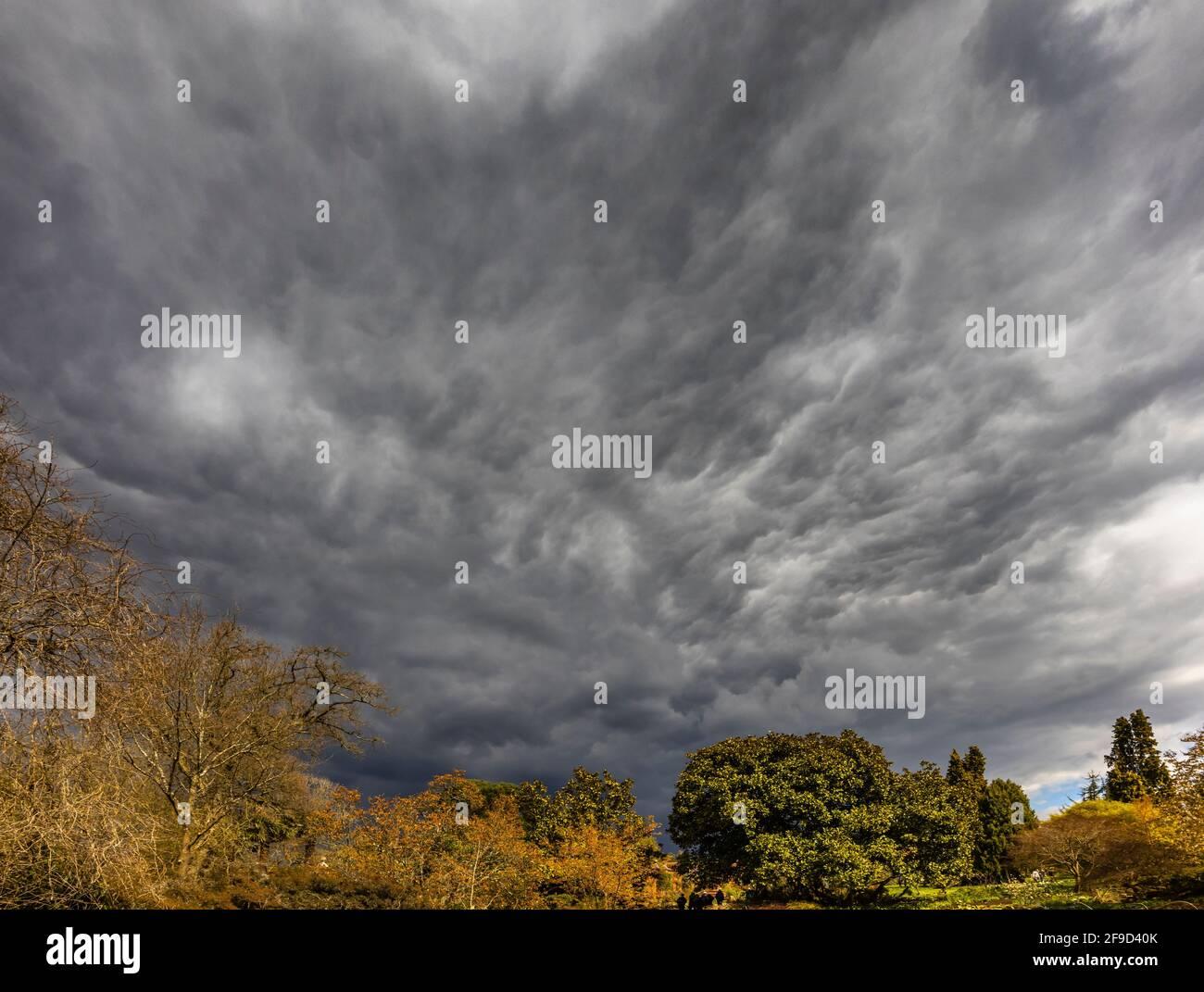 Ciel spectaculaire avec des nuages de tempête gris au-dessus de RHS Garden, Wisley, Surrey, sud-est de l'Angleterre au printemps, avant de fortes pluies Banque D'Images
