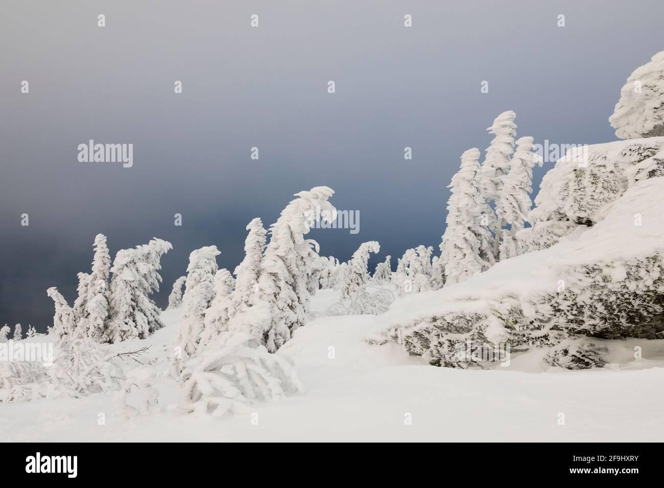 Paysage en hiver. Grand Arber, Forêt de Bohême, Bavière, Allemagne Banque D'Images