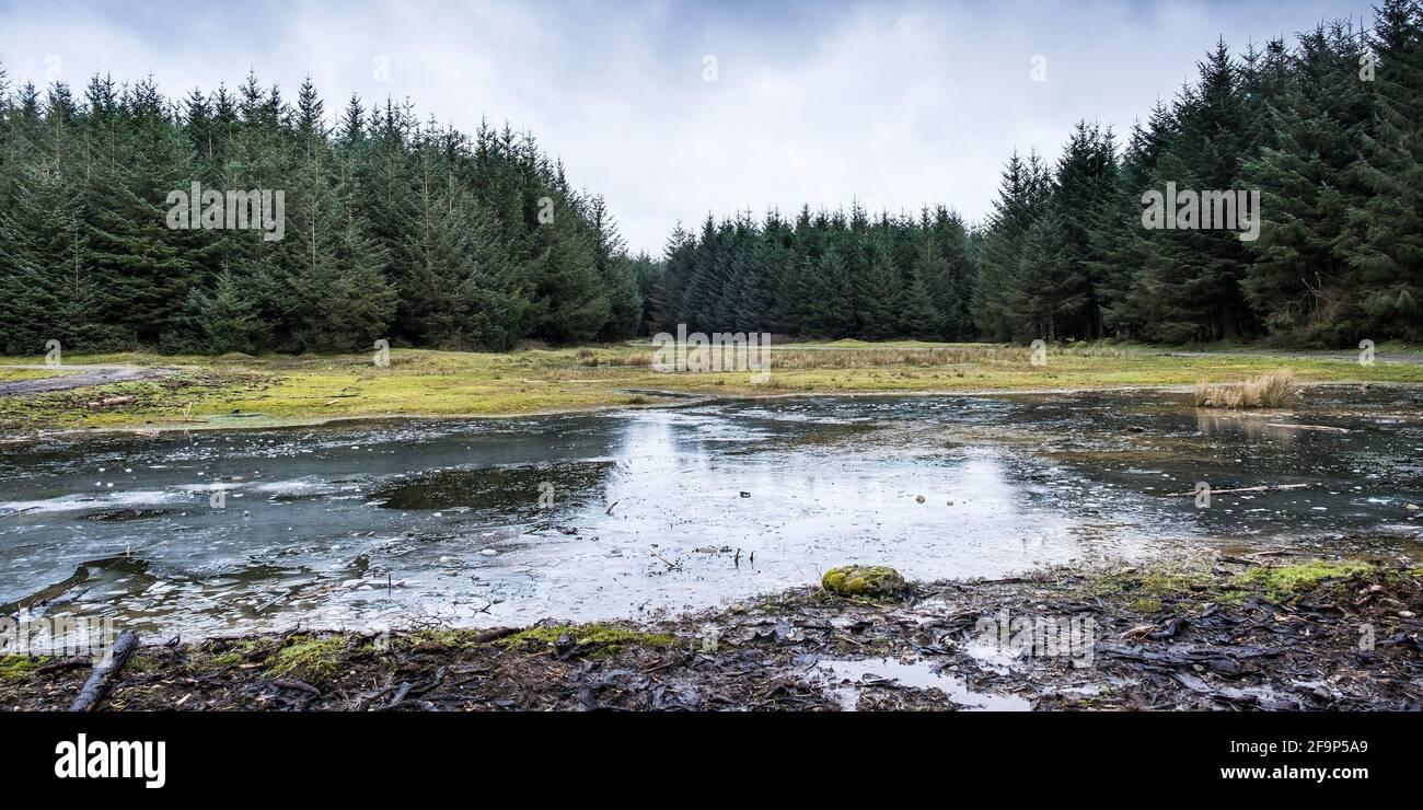 Une vue panoramique sur le terrain de la forêt de Davidstow, sur l'aérodrome de Davidstow de la deuxième Guerre mondiale, sur la Moor de Bodmin, dans les Cornouailles. Banque D'Images