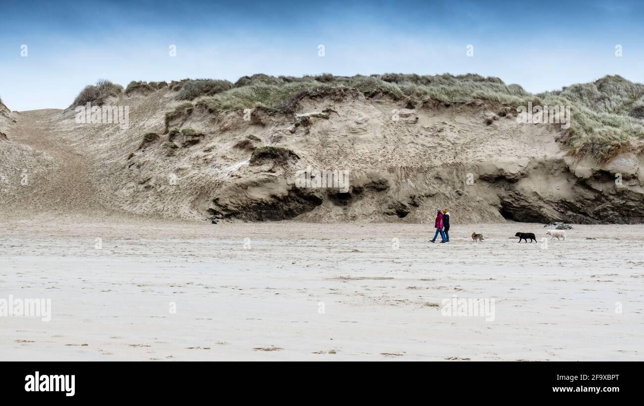 Une image panoramique des randonneurs qui marchent leurs chiens devant le système de dunes de sable de Crantock Beach à Newquay, en Cornouailles. Banque D'Images