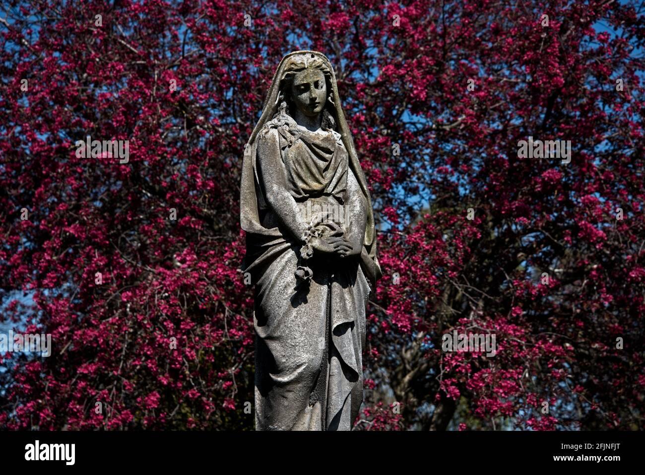 Statue d'une femme en deuil sur fond de cerisier rouge, cimetière Dean, Édimbourg, Écosse, Royaume-Uni. Banque D'Images