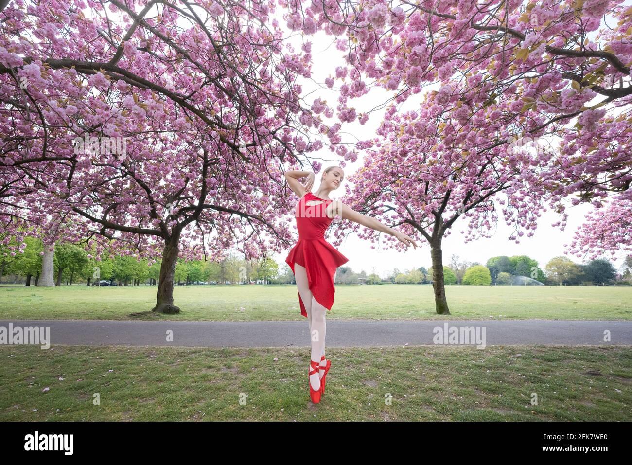 Londres, Royaume-Uni. 29 avril 2021. Journée internationale de la danse : l'ARIA Tilah, étudiant à l'Académie royale de danse, se produit parmi les magnifiques cerisiers en fleurs de Greenwich Park lors de la Journée internationale de la danse. Célébrée pour la première fois en 1982, la Journée internationale de la danse a lieu chaque année depuis l'anniversaire de la naissance de Jean-Georges Noverre (1727-1810), considéré comme le créateur du ballet moderne. Credit: Guy Corbishley/Alamy Live News Banque D'Images