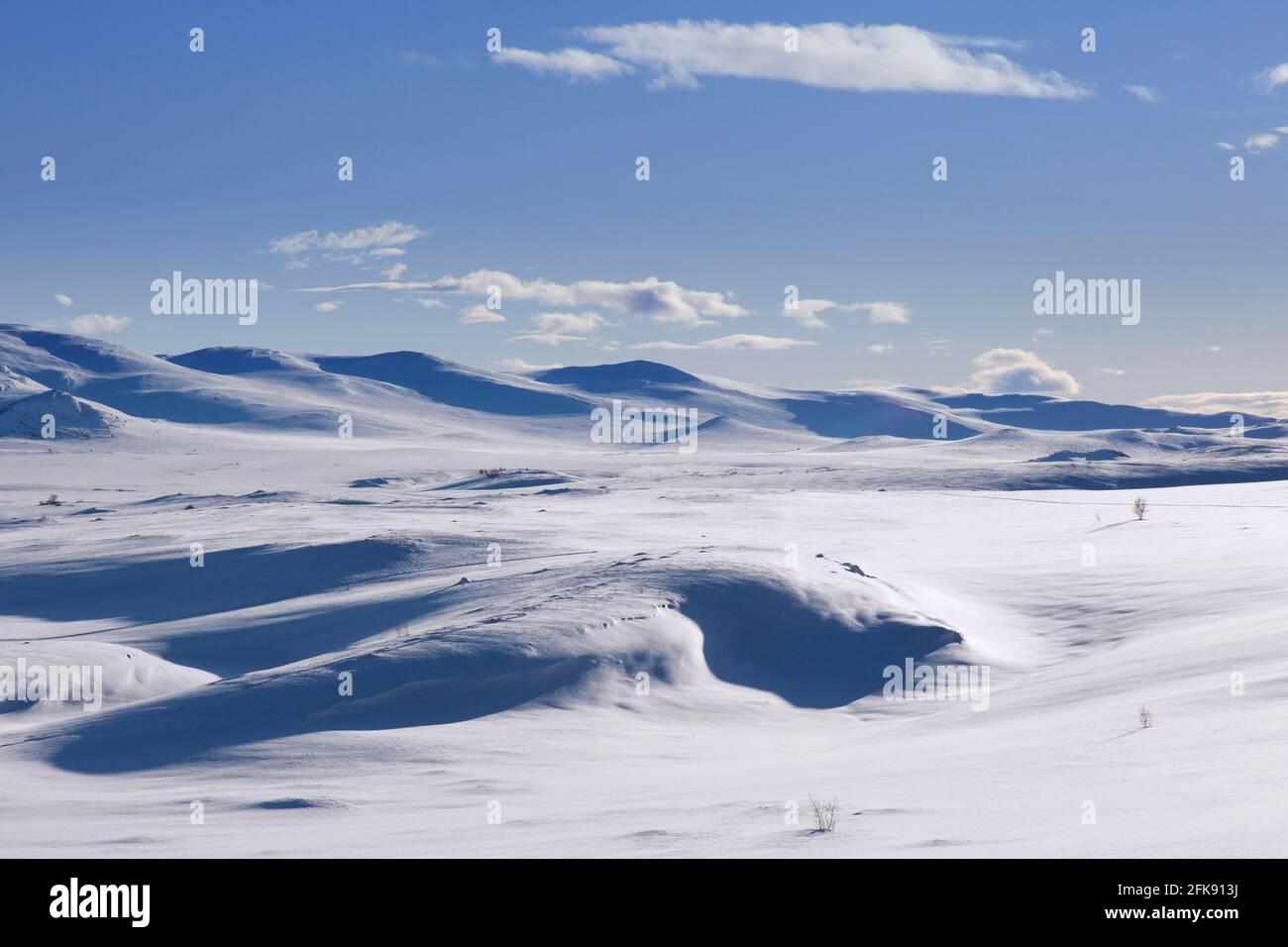 Paysage de montagne couvert de neige dans le parc national de Dovrefjell–Sunndalsfjella en hiver, en Norvège Banque D'Images