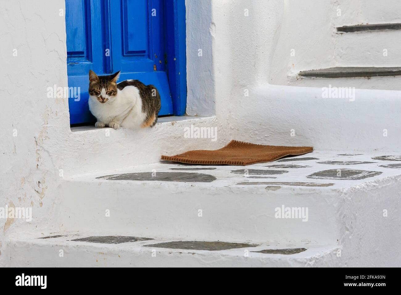 Chat perché au seuil d'un bâtiment blanchi à la chaux avec porte et escalier bleus, Mykonos, Grèce Banque D'Images