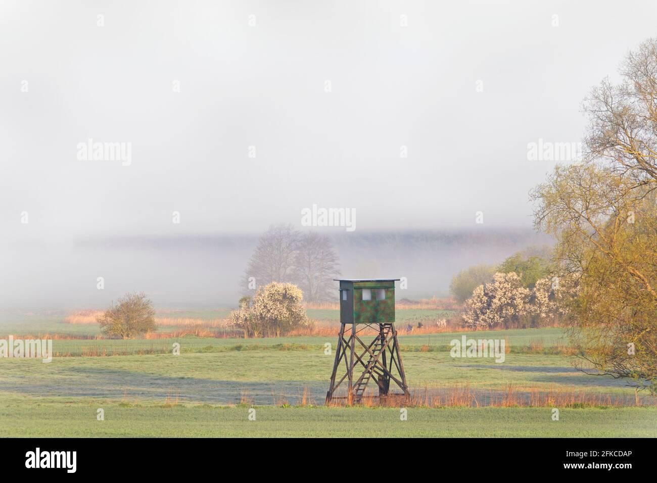 Prairie avec cachette surélevée pour la chasse au sanglier et au roe cerf dans la brume tôt le matin au printemps Banque D'Images