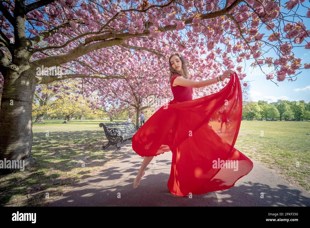 Londres, Royaume-Uni. 1er mai 2021. Météo au Royaume-Uni : le soleil fleurira dans Greenwich Park. Rebecca Olarescu, étudiante en formation de maîtres à la London Contemporary Dance School (LCDS), bénéficie du soleil de vacances en bord de mer en se posant près des cerisiers en fleurs de Greenwich Park. Credit: Guy Corbishley/Alamy Live News Banque D'Images