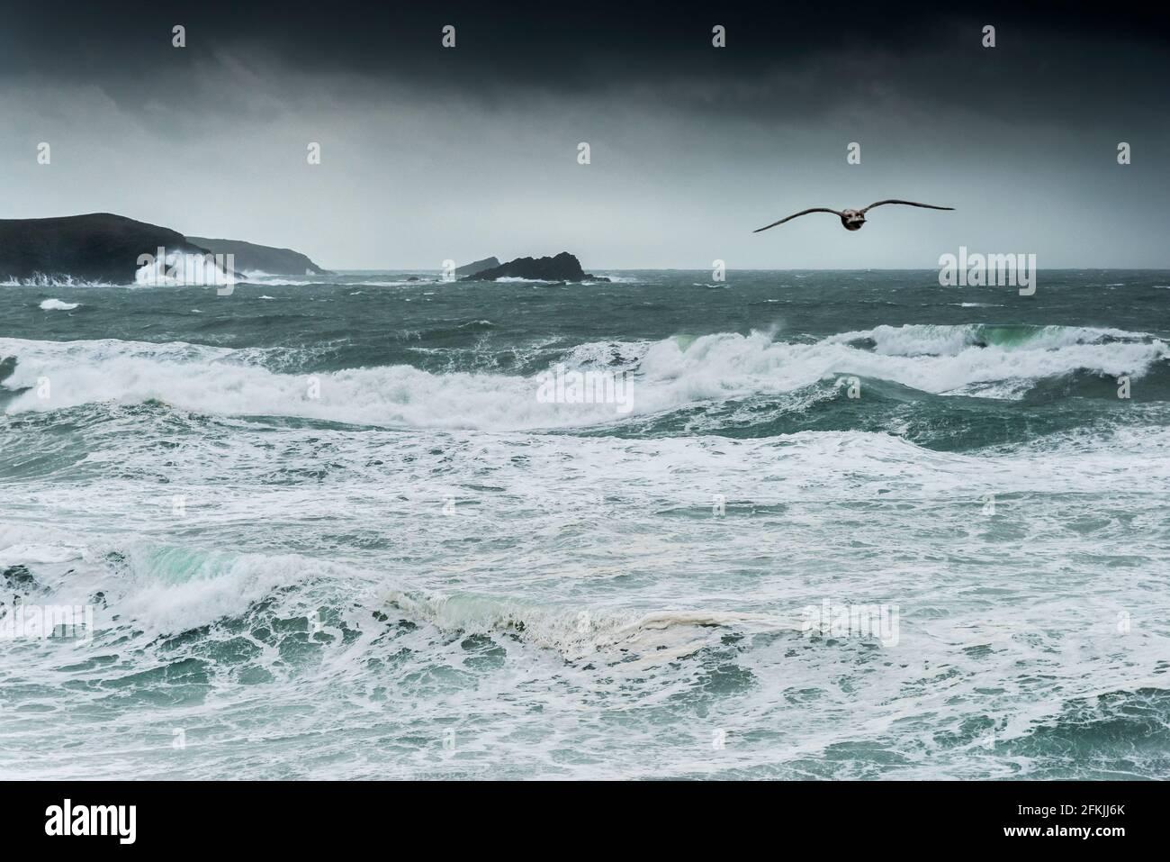 Un mouette volant au-dessus de mers agitées par temps orageux dans la baie de Fistral à Newquay, en Cornouailles. Banque D'Images