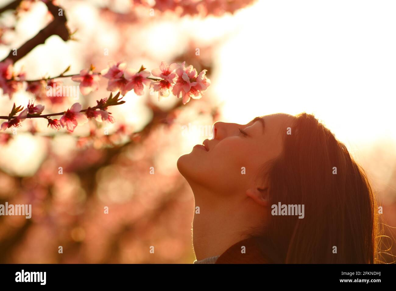 Vue latérale portrait d'une femme qui sent des fleurs à coucher de soleil dans un champ fleuri Banque D'Images