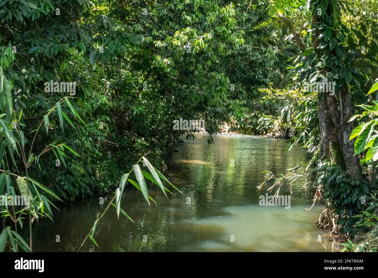 Un petit ruisseau à Kampung Amo, Serian, Sarawak, Malaisie orientale Banque D'Images