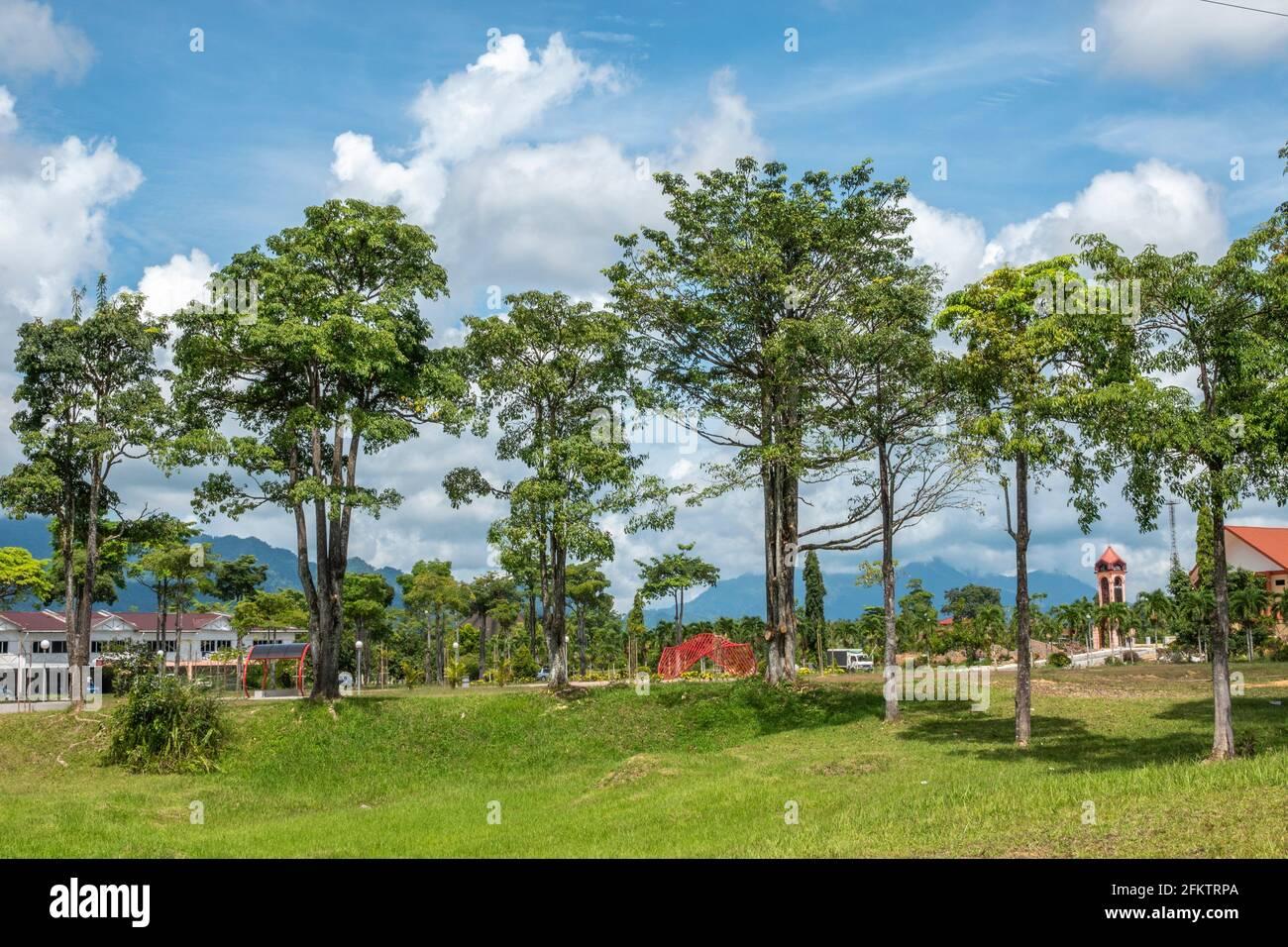 Arbres de la ville de Tebedu, Serian, Sarawak, Malaisie orientale Banque D'Images