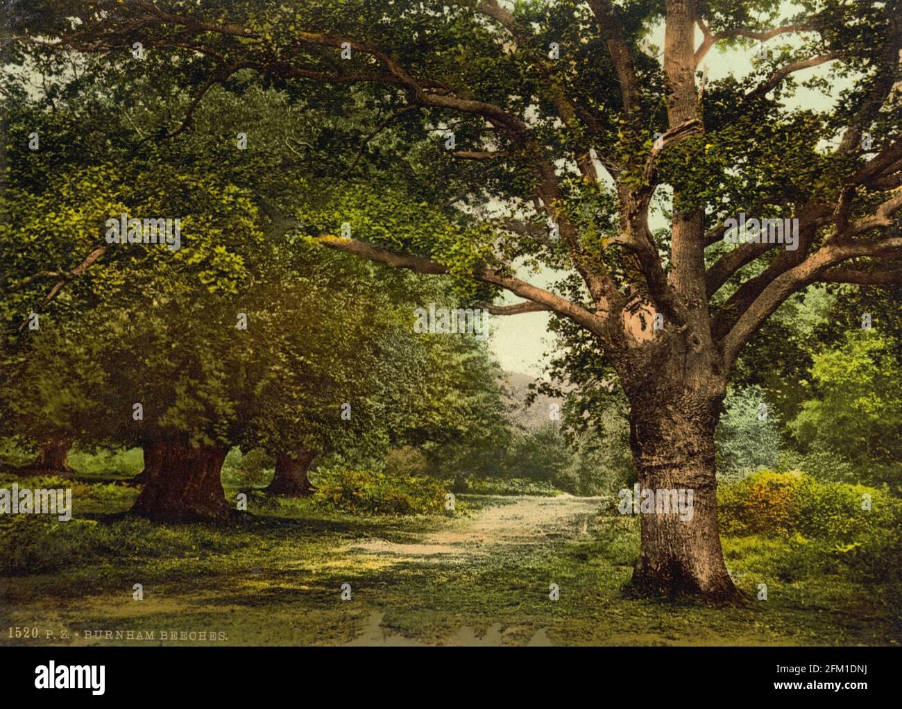 Burnham Beeches dans Buckinghamshire vers 1890-1900 Banque D'Images
