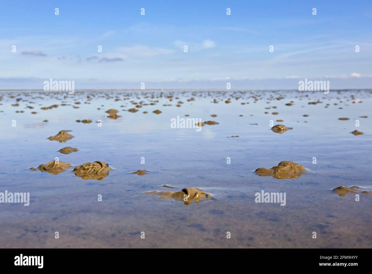 Ver à soie / ver à sable européen (marina d'Arenicola) moulages de sédiments déférés sur la plage à marée basse Banque D'Images
