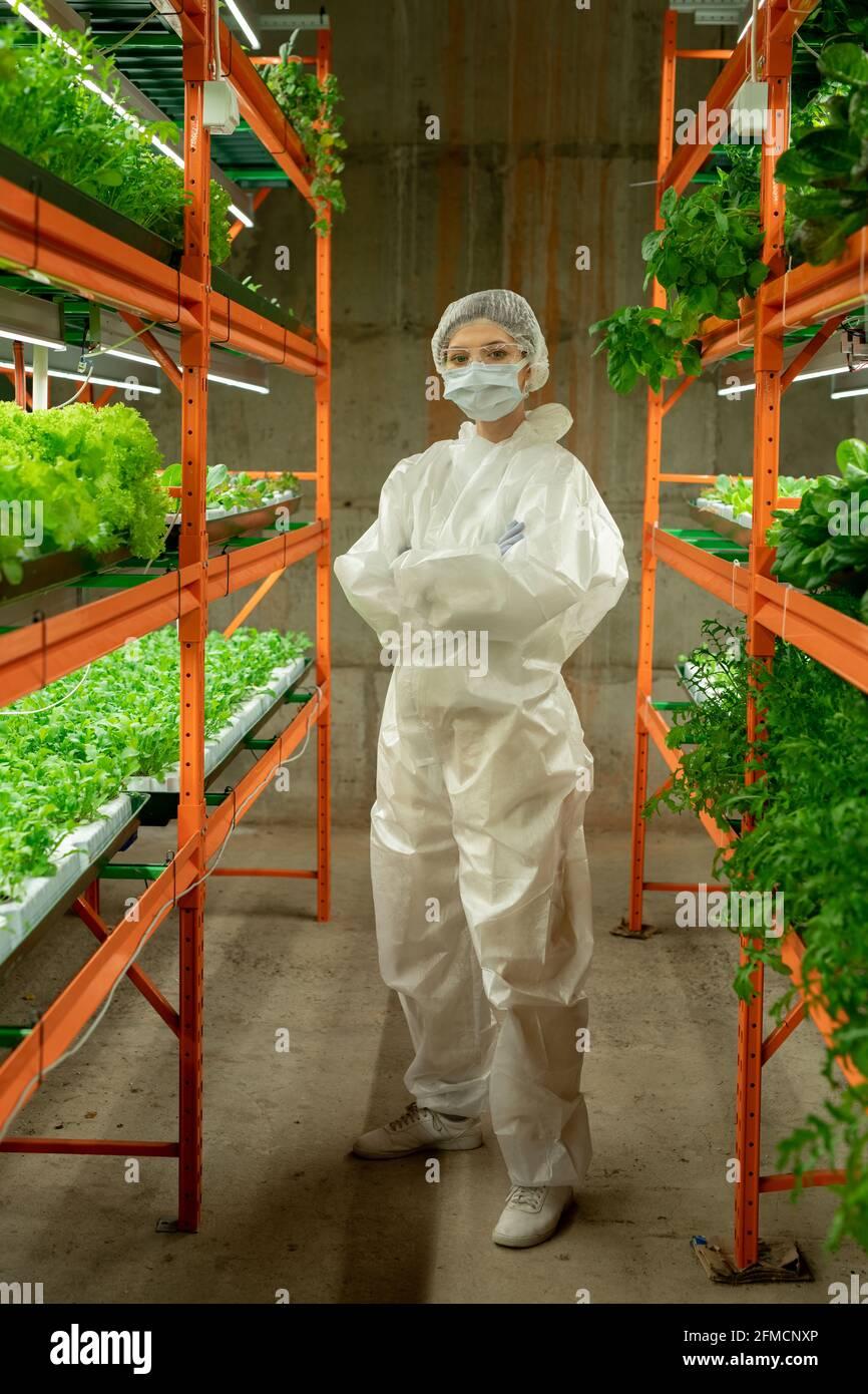 Portrait d'une agronome confiante en costume de protection, masque et casquette debout avec bras croisés entre les étagères verticales de la ferme Banque D'Images