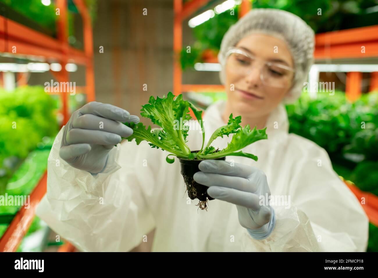 Gros plan du contenu de la maison de travail dans la combinaison de protection et le latex gants tenant le pot de plante et vérifiant les feuilles d'arugula Banque D'Images