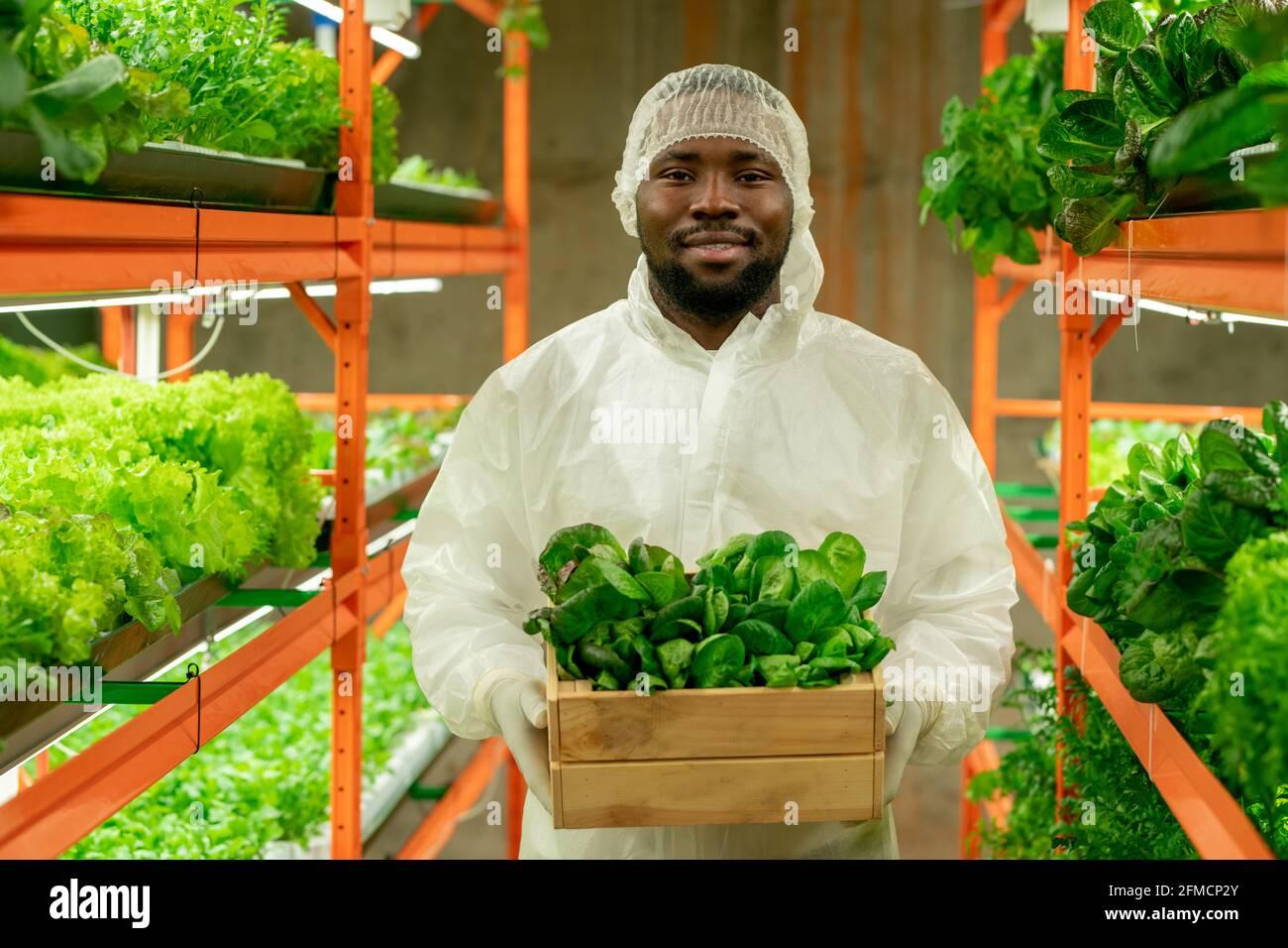 Portrait d'un ingénieur agricole barbu afro-américain positif en Cap et combinaison de protection tenant une petite boîte de semis verts à la verticale ferme Banque D'Images