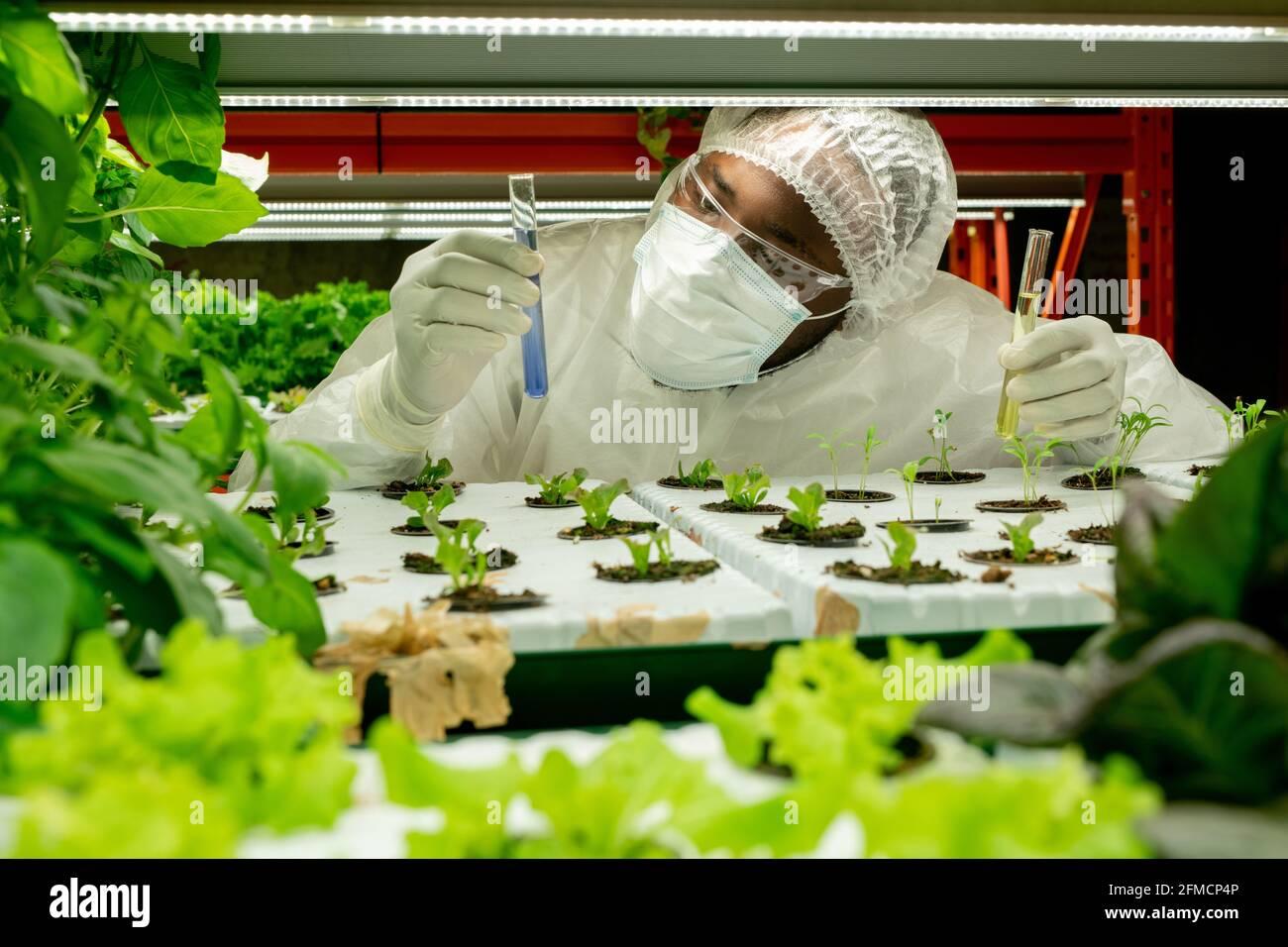 Scientifique agricole afro-américain sérieux dans un masque et des lunettes de protection bleu liquide dans les pots de semis tout en maintenant l'expérience en serre Banque D'Images