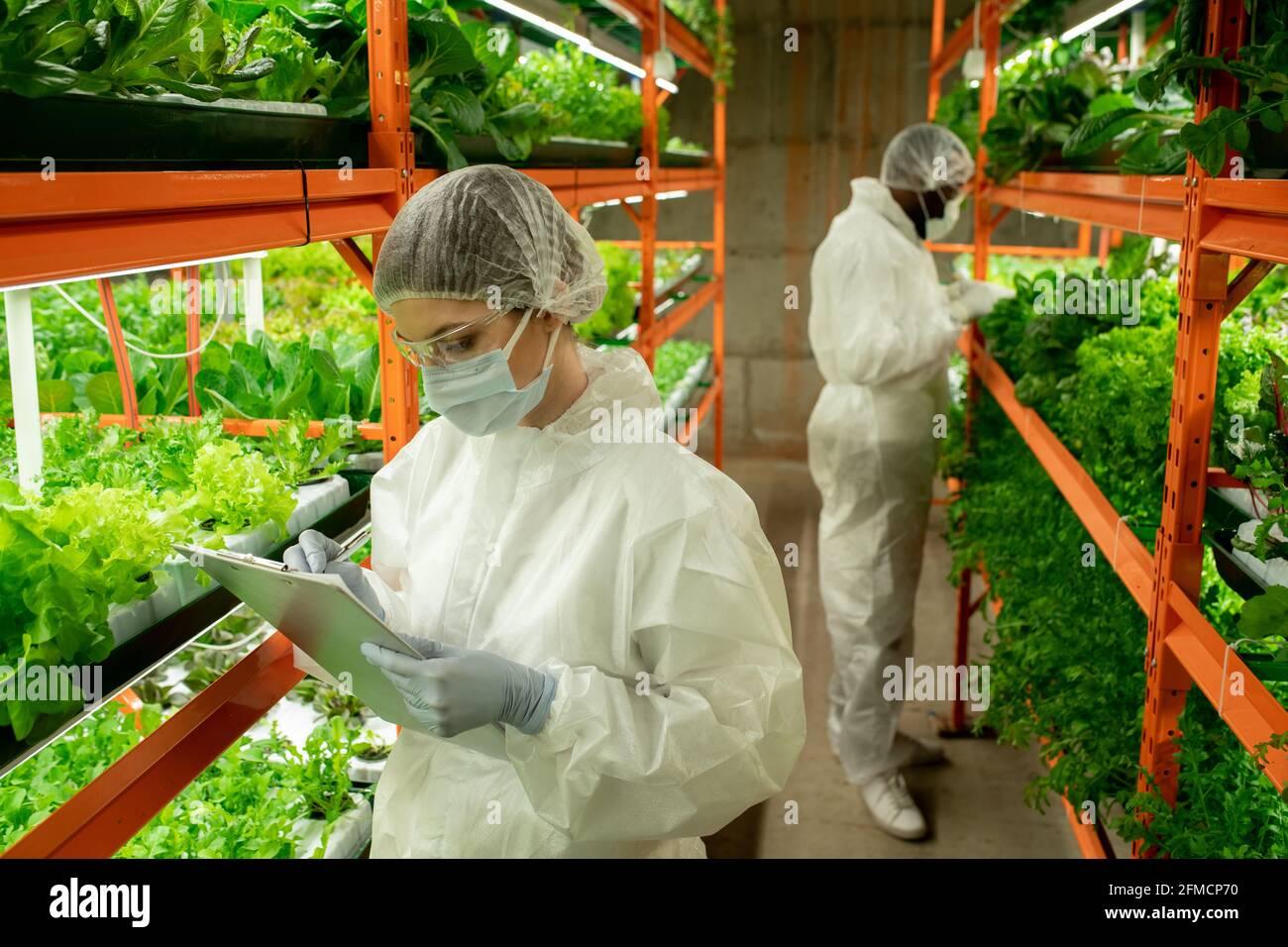 Jeune femme sérieuse dans le masque et le chapeau debout à l'étagère avec de la laitue et de prendre des notes sur les feuilles à la ferme verticale Banque D'Images