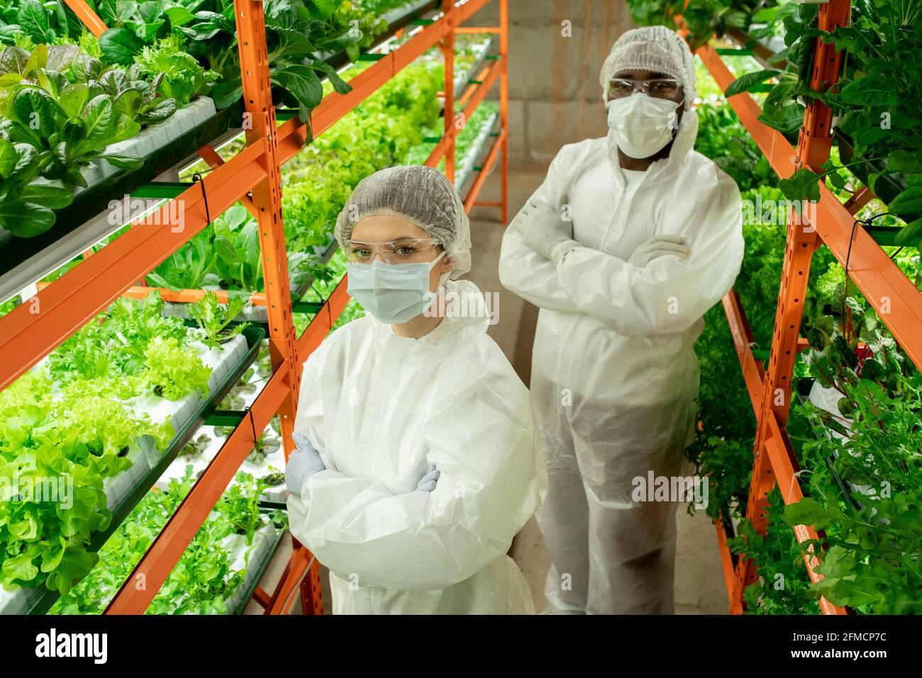 Au-dessus de la vue de jeunes travailleurs multi-ethniques de serre confiants dans les vêtements de travail et masque debout avec bras croisés entre les étagères de la verticale ferme Banque D'Images
