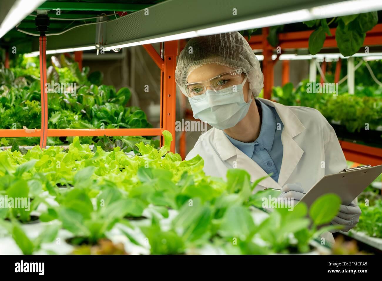 Jeune agroingénieur en lunettes, masque et chapeau debout à la serre verticale de ferme et prenant des notes sur les plantules vertes dans le presse-papiers Banque D'Images