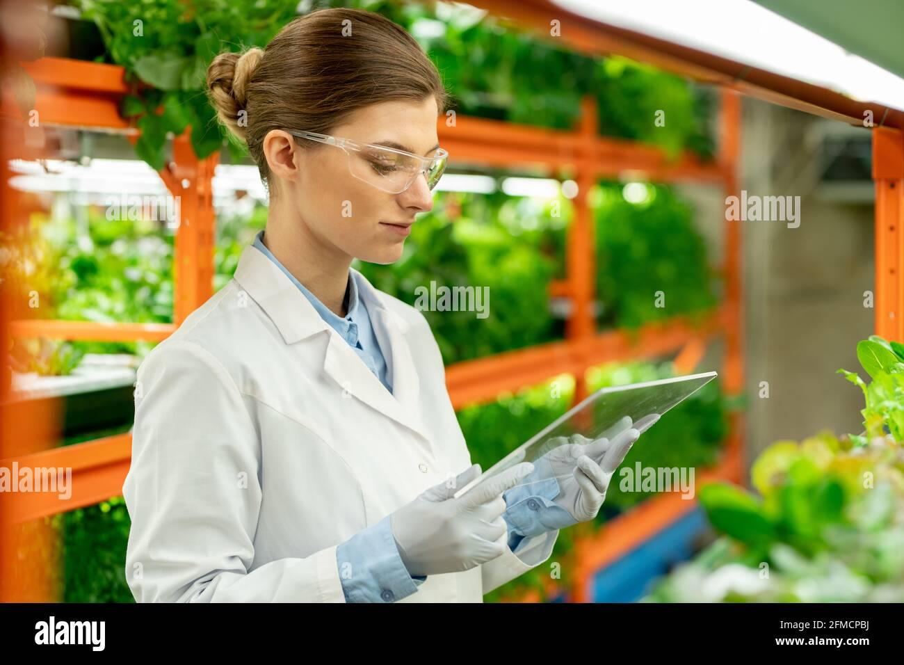 Jeune ingénieur agricole très occupé avec un cheveu interactif tout en analysant la croissance des plantes à la ferme verticale Banque D'Images