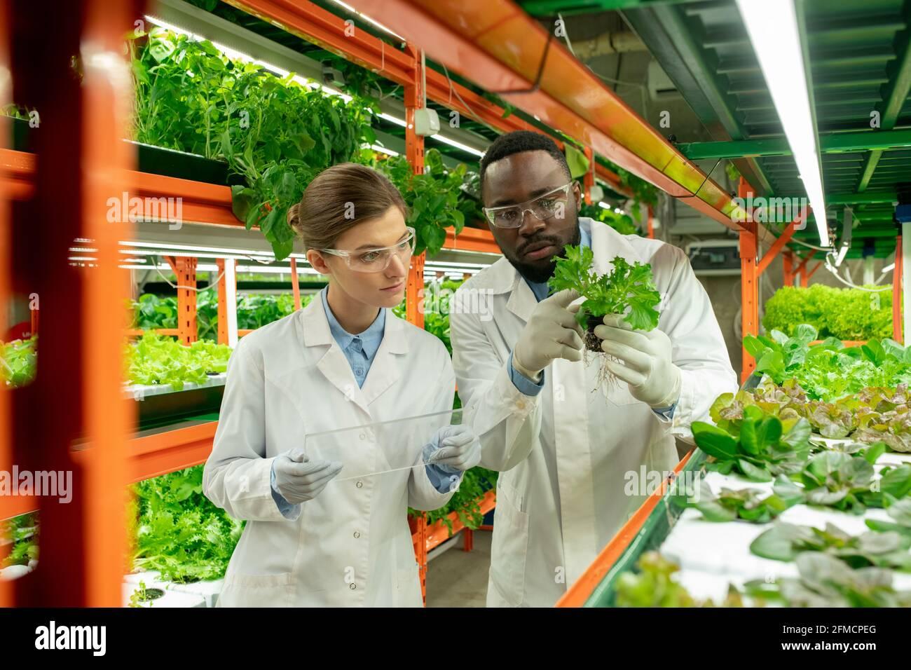 Jeunes spécialistes agricoles multiethniques concentrés en manteaux blancs et lunettes de protection examen des semis et rapport de remplissage sur dispositif transparent Banque D'Images
