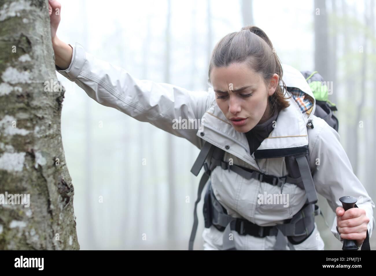 Trekker fatigué se reposant dans un arbre dans la montagne une journée brumeuse Banque D'Images