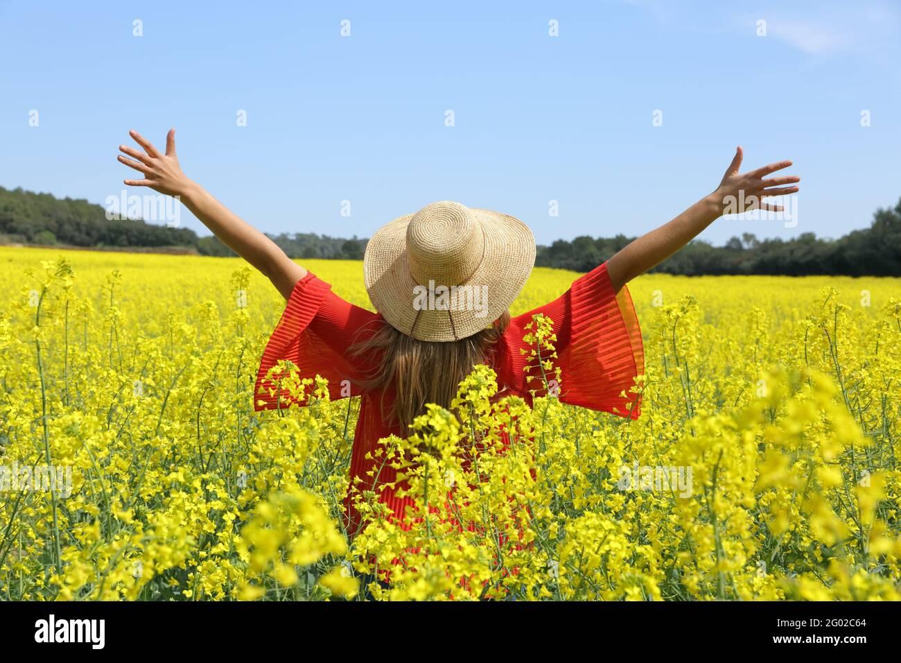 Vue arrière d'une femme excitée dépassant les bras célébrant le printemps dans un champ de fleurs jaunes Banque D'Images