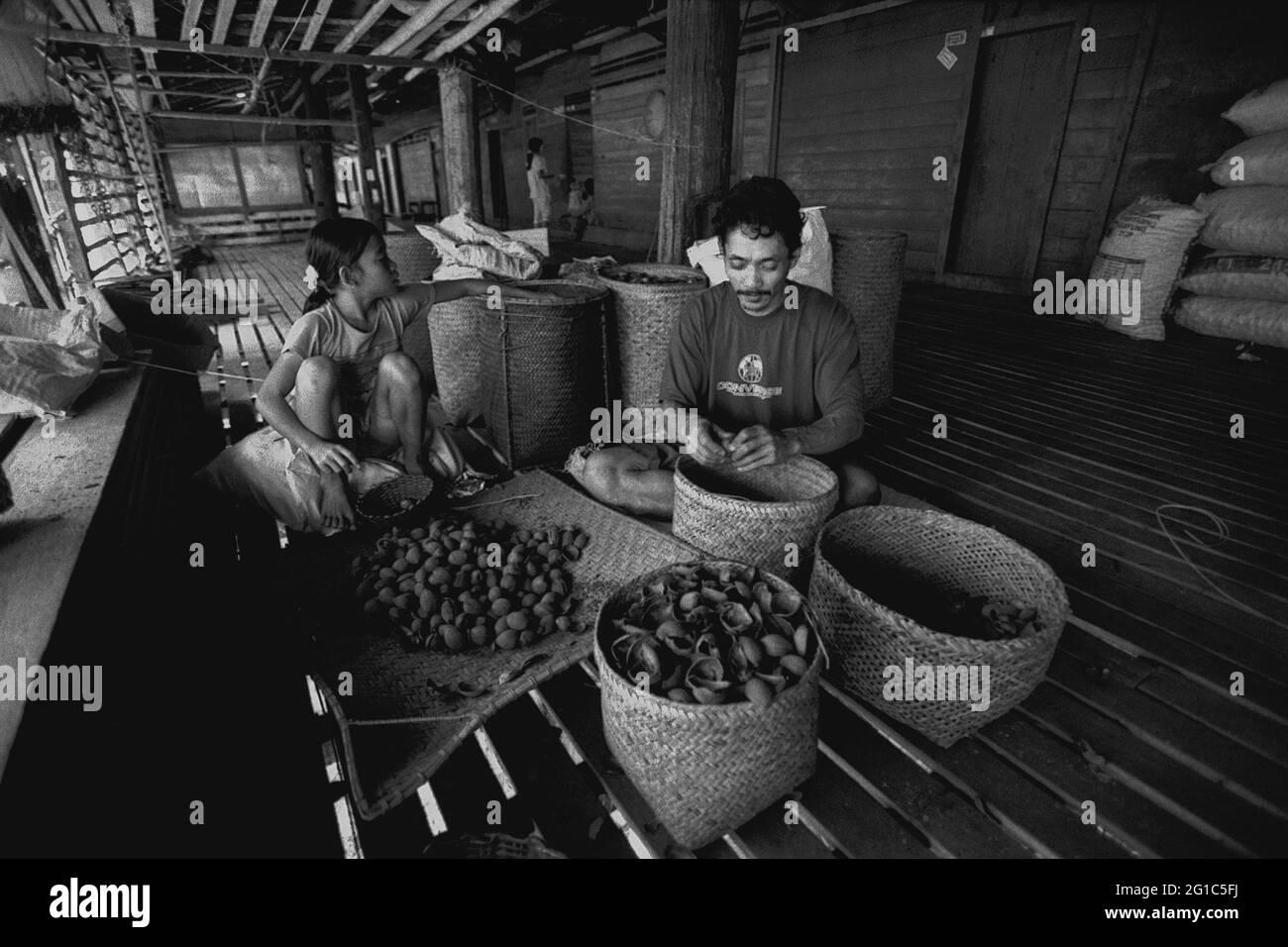 Uluk Palin, Embaloh Hilir, Kapuas Hulu, Kalimantan occidental, Indonésie. Mars 2007. Un homme et un enfant qui retire des coquilles de noix de suif Borneo (tengkawang) à la maison de la communauté de Dayak Tamambaloh à Uluk Palin.--photographiés sur film noir et blanc, scannés, numérisés. Banque D'Images