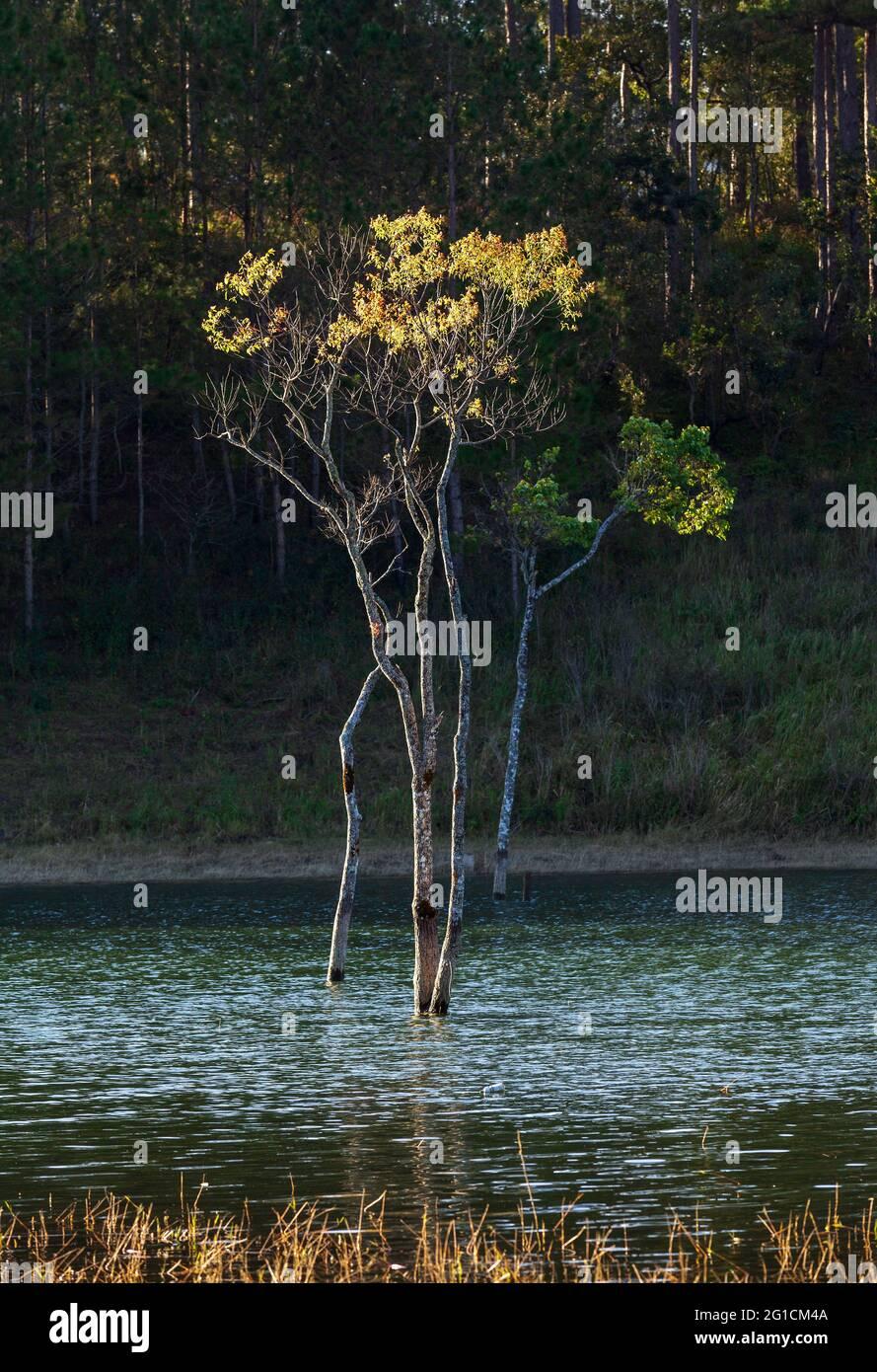 Arbres d'automne dans le lac Banque D'Images