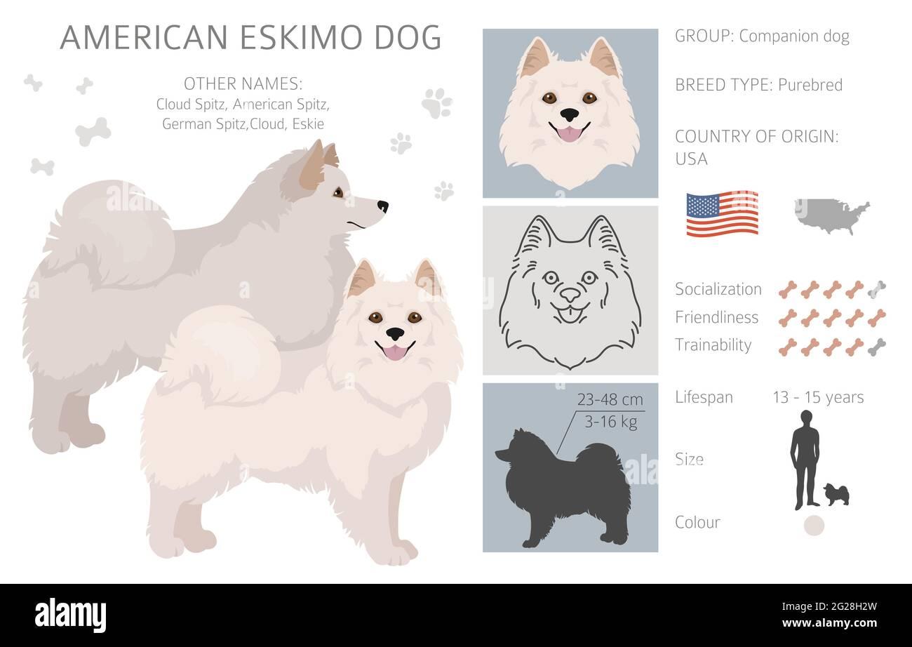 Chien esquimau américain toutes les couleurs clipart. Différentes couleurs de pelage. Illustration vectorielle Illustration de Vecteur