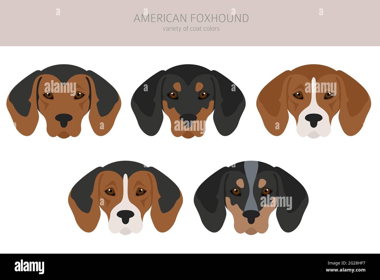 Américain foxliard toutes couleurs clipart. Différentes couleurs de pelage. Illustration vectorielle Illustration de Vecteur
