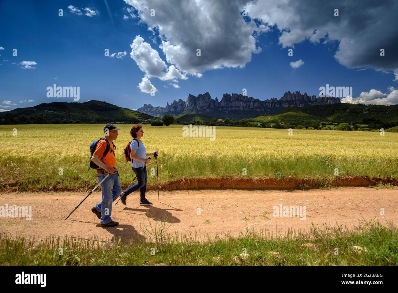 Randonneurs marchant entre les champs de la Pla de Masroig, avec la montagne de Montserrat en arrière-plan (Bages, Barcelone, Catalogne, Espagne) Banque D'Images