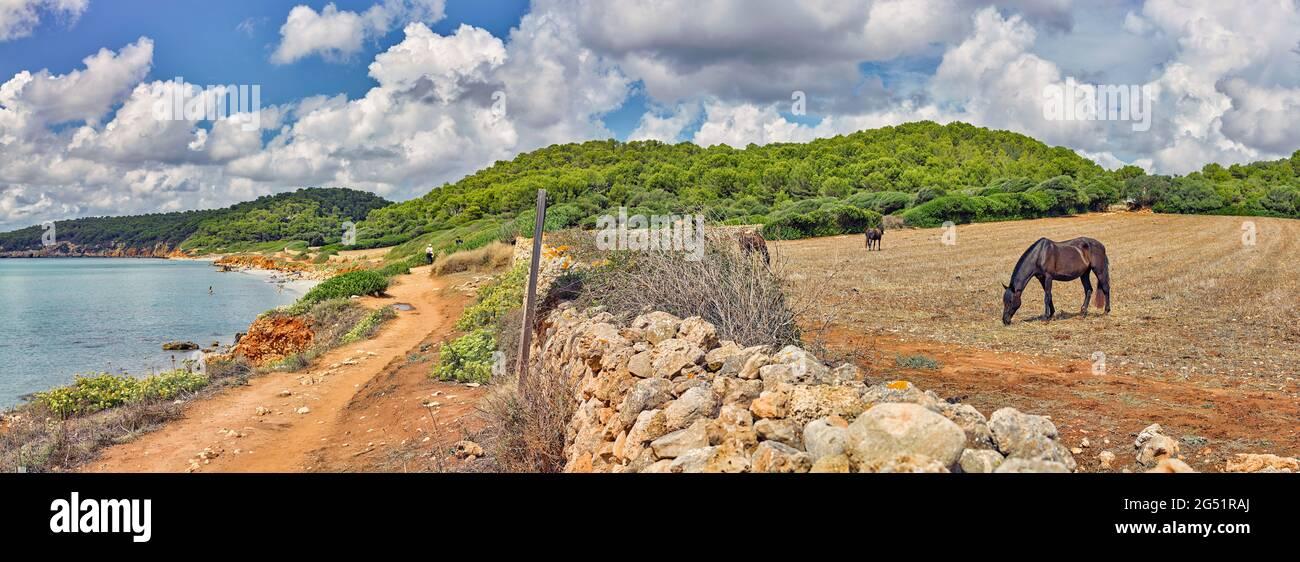 Chevaux sauvages paître sur la mer, es Migjorn Gran, Minorque, Espagne Banque D'Images