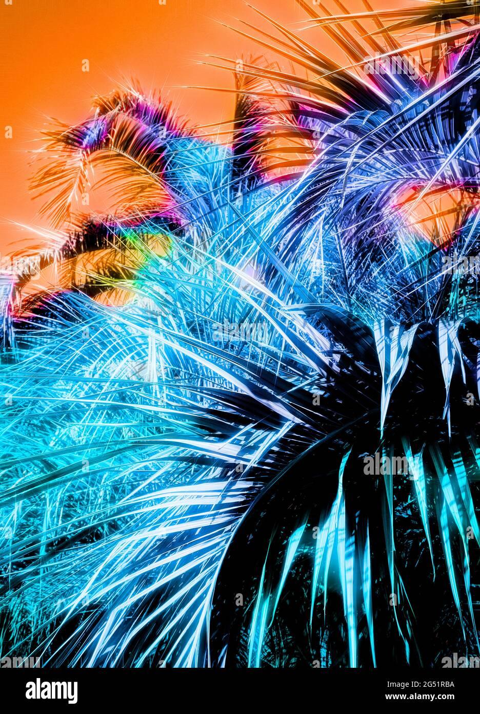 Photographie de palmiers avec manipulation des couleurs Banque D'Images