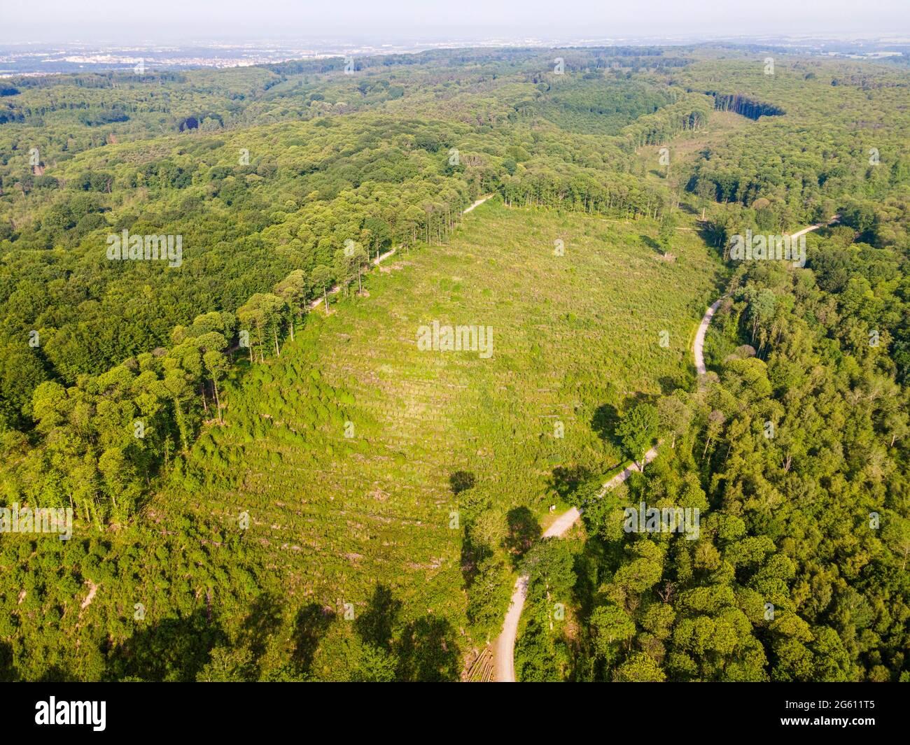 France, Val d'Oise, Forêt de Montmorency, jeunes chênes, parcelle 73 (vue aérienne) Banque D'Images