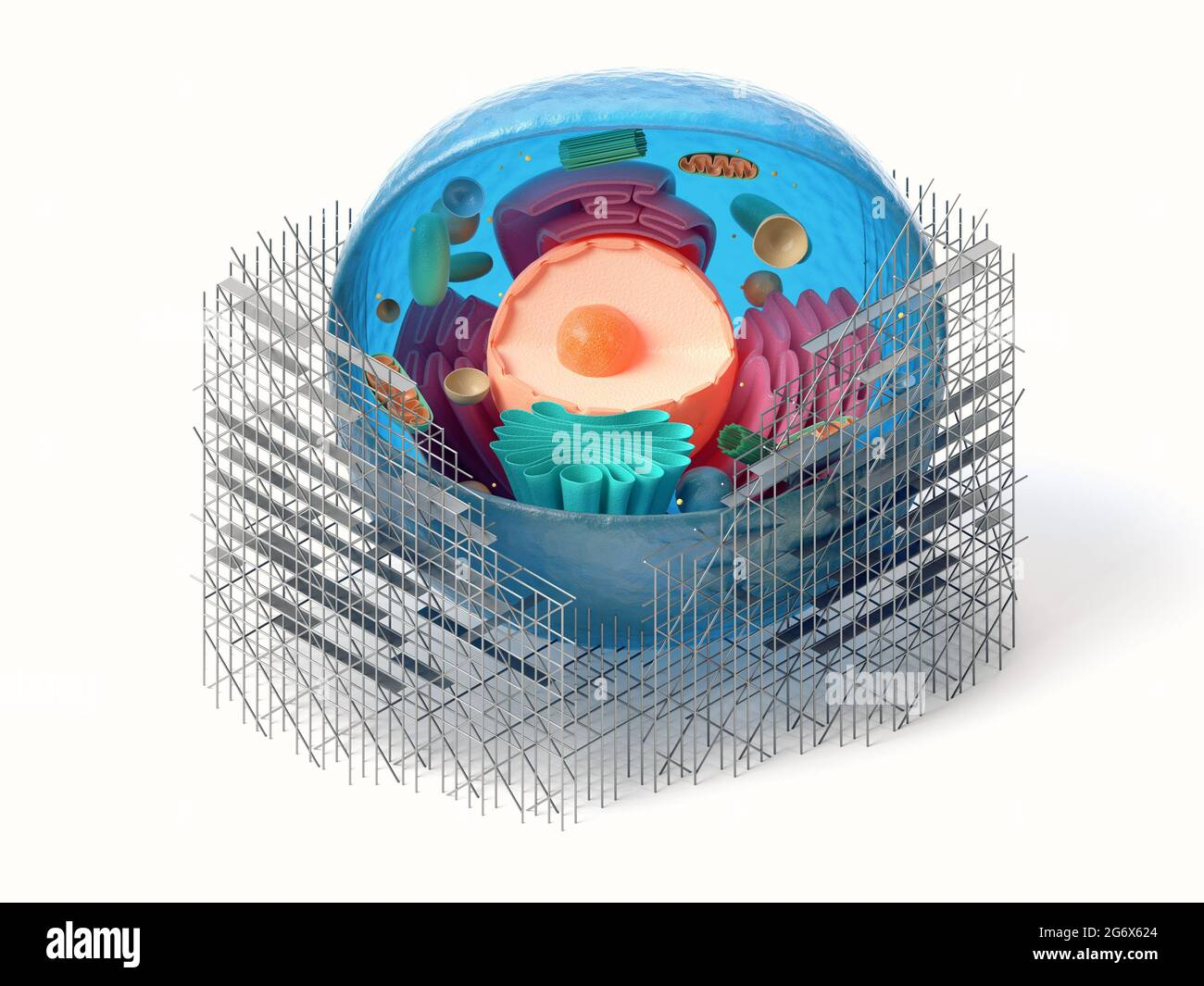 rendu 3d de la section transversale des cellules animales avec échafaudages isolés sur du blanc. Concept de réparation cellulaire biologique Banque D'Images