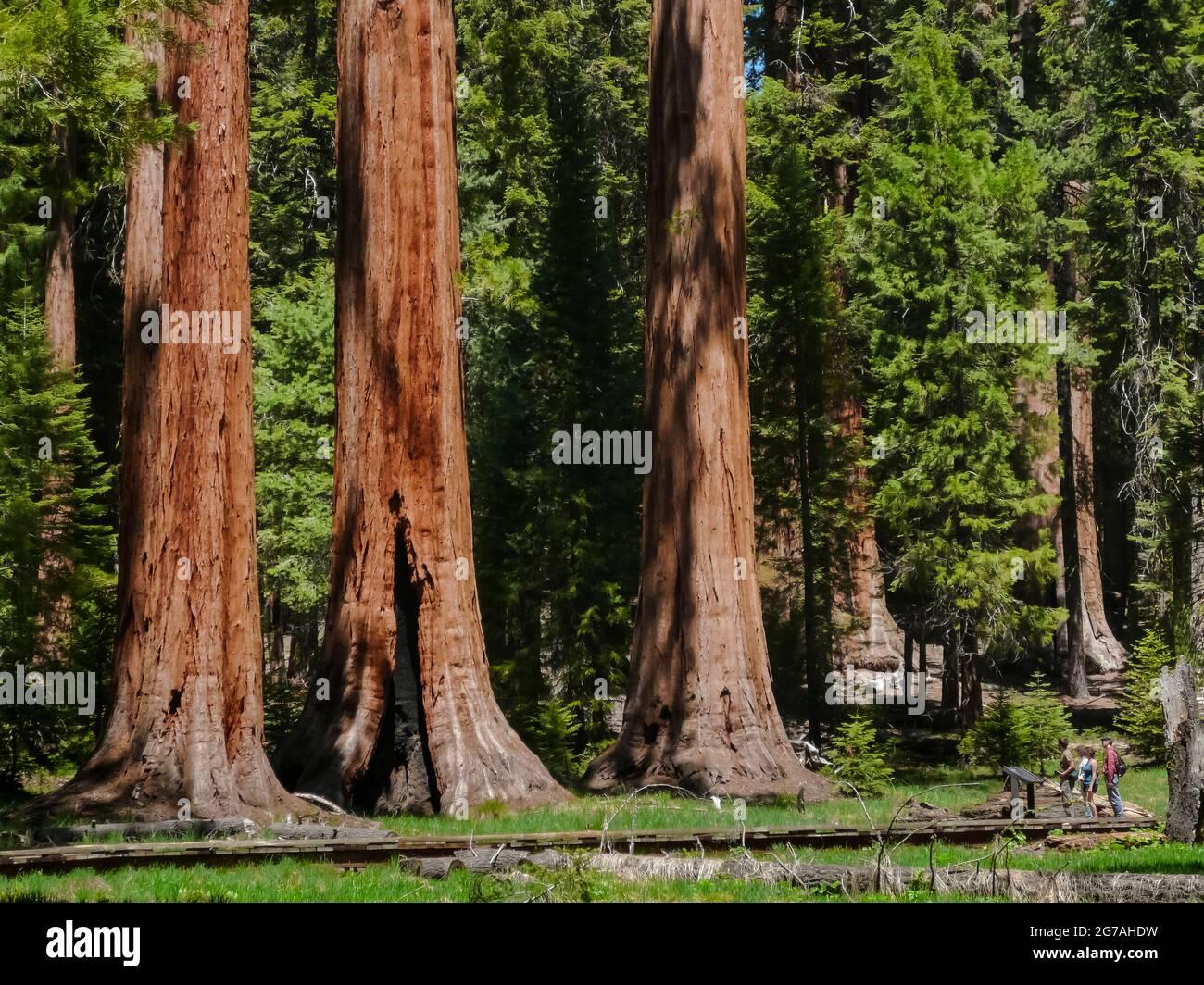 Sequoia National Park, Californie, USA Banque D'Images