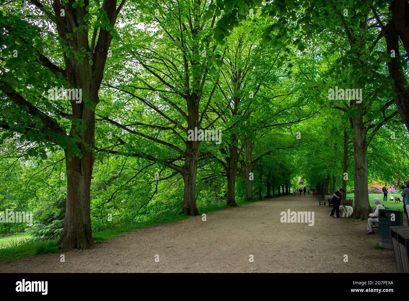 Un chemin bordé d'arbres sur le domaine de Kenwood House à Hampstead Heath, dans le nord de Londres en Angleterre. Un visiteur repose sur un banc et un homme marche un chien. Banque D'Images