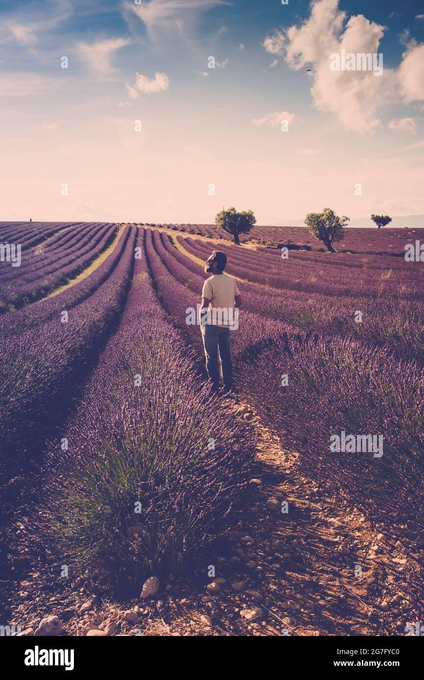 Un homme debout regarde le champ de lavande autour de lui - humain et beau voyage pittoresque nature plein air - france provence valensole emplacement - parfumé Banque D'Images