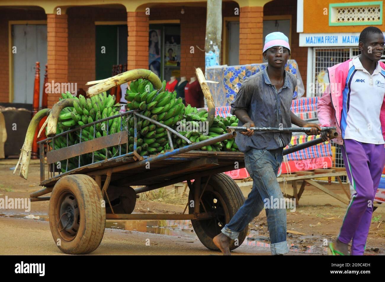 Un homme qui pousse un chariot transportant des bananes pour exportation de l'Ouganda à la frontière kenyane dans le district de Busia. Ouganda. Banque D'Images