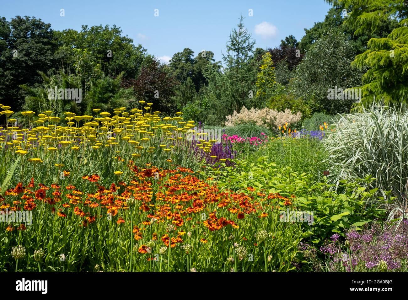 Bressingham Gardens près de DISS dans Norfolk. Jardin coloré influencé par l'ethos naturaliste de plantation avec une large palette de couleurs. Banque D'Images