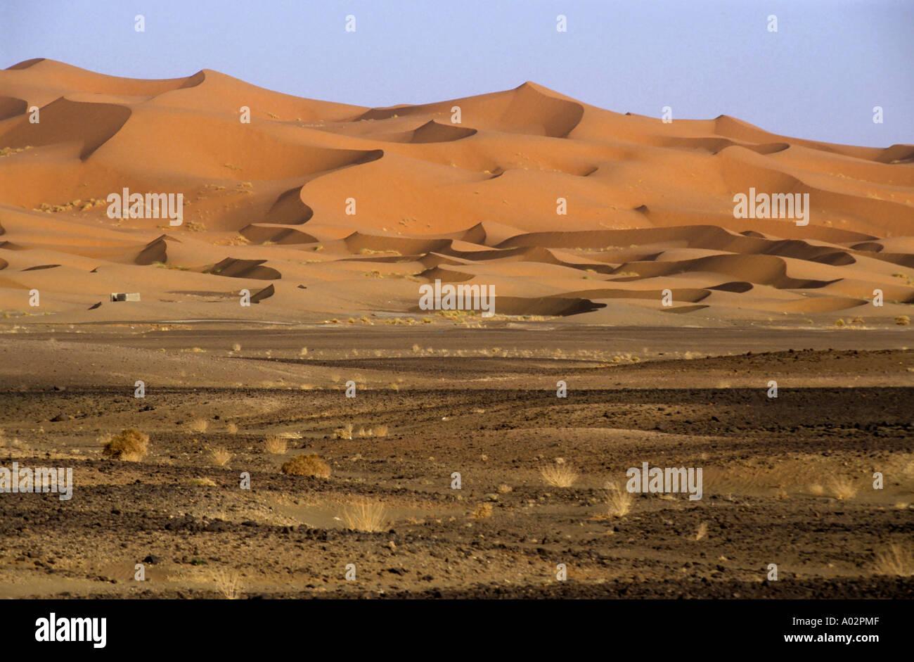 Dunes de sable du désert du Sahara, l'Erg Chebbi, Maroc. Banque D'Images